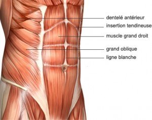 abdos du bas anatomie